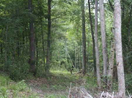 Great Hunting Tract : Petrey : Crenshaw County : Alabama