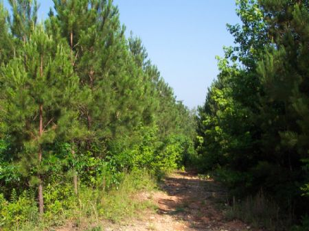 21.11 Dividable Wooded Acres : Acworth : Bartow County : Georgia