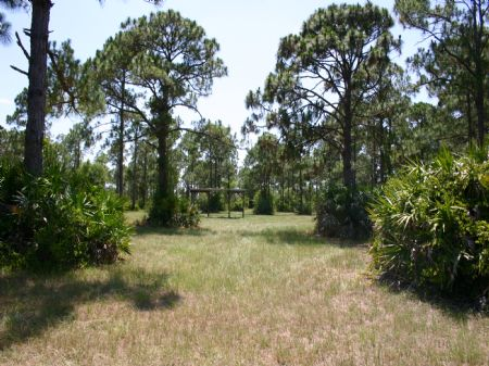 9.19 Acres Natural Woodland : Fellsmere : Indian River County : Florida