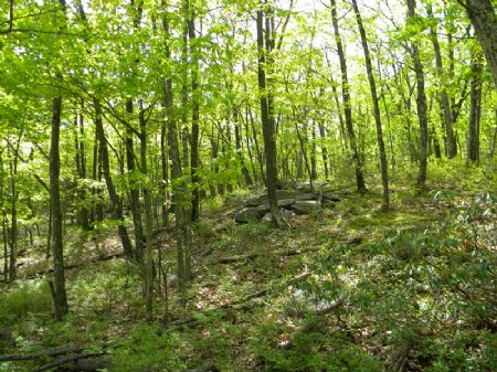 35+ Wooded Acres Near Mt. Prosper : Mamakating : Sullivan County : New York