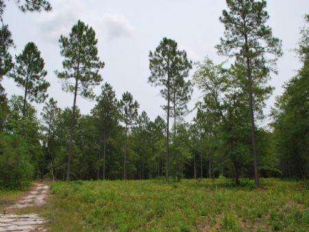 Mcmillan Creek Tract : Jesup : Wayne County : Georgia