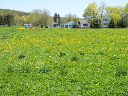 10 Acres Quality Level Farmland : Mcgraw : Cortland County : New York