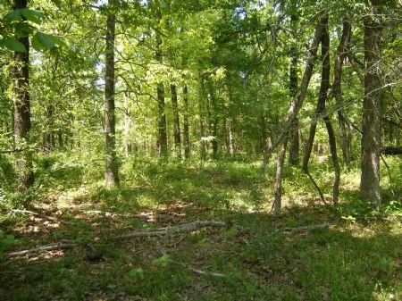 Deer Run Creek Tract 1 : Idabel : McCurtain County : Oklahoma
