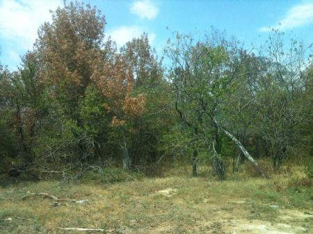 Deer Run Creek Tract 7 : Idabel : McCurtain County : Oklahoma
