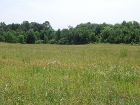 5.8 Acres For Country Home : New Prospect : Spartanburg County : South Carolina