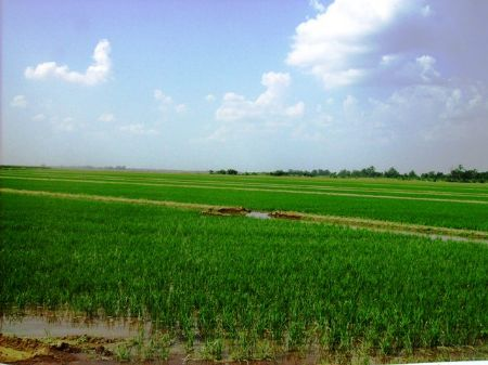 920 +/- Acre Irrigated Farm : Tucker : Jefferson County : Arkansas