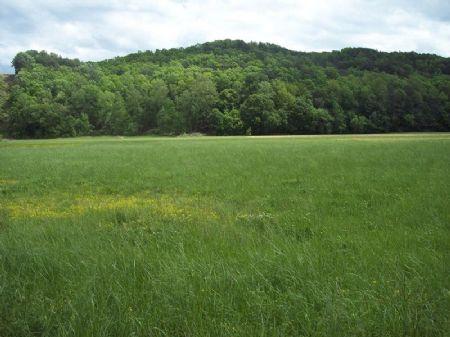 37.775 Ac Lucas Rd Area : Cartersville : Bartow County : Georgia