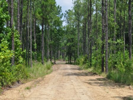 Timber, Development, Charleston : Huger : Berkeley County : South Carolina