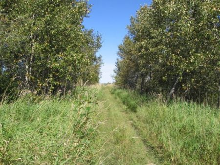 North Woods Land Near Lake : Warroad : Roseau County : Minnesota