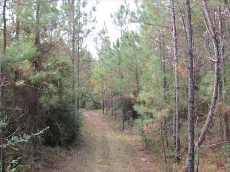 Allen Parish Timberland For Sale : Reeves : Allen Parish : Louisiana