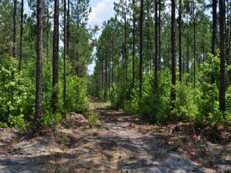 Development, Easement, Recreational : Huger : Berkeley County : South Carolina