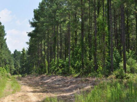 112 Ac - United Drive : Berkeley County : Berkeley County : South Carolina