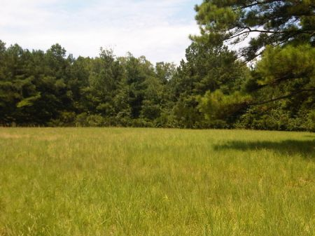 75 Acres - Conway Sc : Conway : Horry County : South Carolina