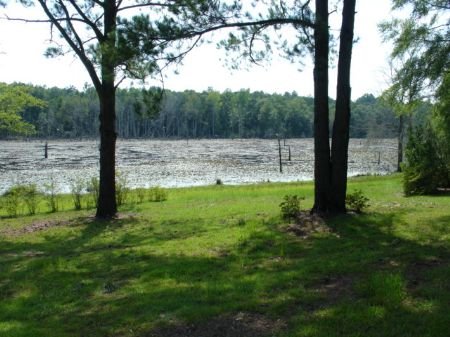 72 Acres Of Paradise : Clayton : Barbour County : Alabama