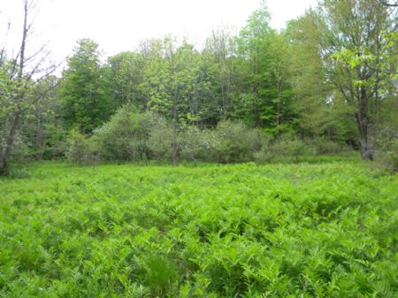 50 Acres Farmland Woods Hunters : Preble : Cortland County : New York