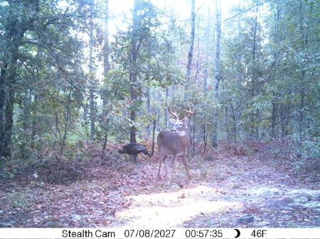 140 Acres On Angell Road : Millen : Jenkins County : Georgia