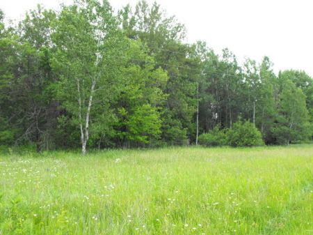 50 Acres On Long Lake Rd : Cheboygan : Cheboygan County : Michigan