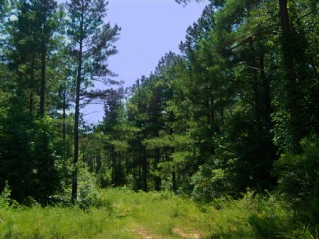 94.06 Acres For Hunting And Timber : Spartanburg : Spartanburg County : South Carolina