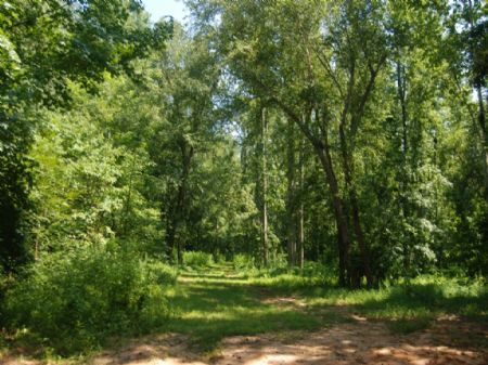91 Acres Of Timberland And Hunting : Pacolet : Spartanburg County : South Carolina