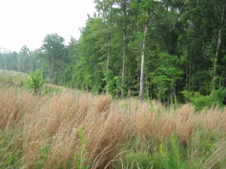 119 Acre Timber / Hunting Property : Blackstock : Fairfield County : South Carolina