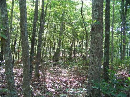 100+/- Acres With Water Views : South Pittsburg : Marion County : Tennessee