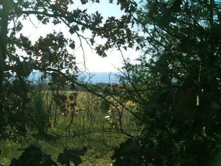 Rock Ridge Acres Tract 7 : Albion : Pushmataha County : Oklahoma