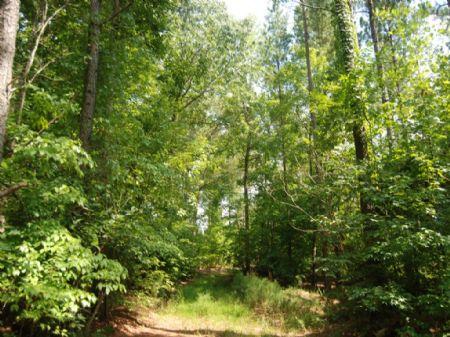 208 Acre Timber/recreational Tract : Union : Union County : South Carolina