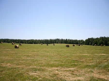 Fields At Sunny Side 24 Acres : Cumberland : Cumberland County : Virginia