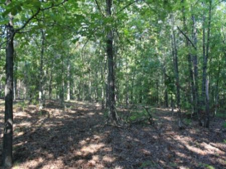 307acre Tract Excellent For Hunting : Sparta : Hancock County : Georgia