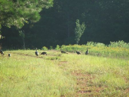 Turkey Ridge Tract : Plantersville : Dallas County : Alabama