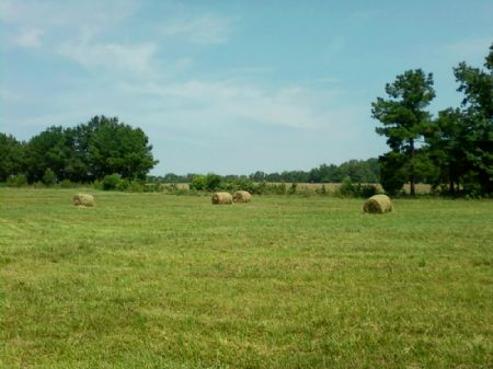 60 Acre Farm With Pasture And Ponds : Williamston : Anderson County : South Carolina