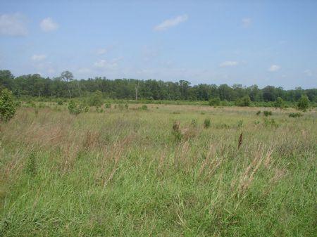Lender Ordered Auction 258.7+ Acres : Cabot : Lonoke County : Arkansas