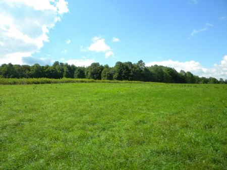 72 Acres Farmland Wood No Gas Lease : Willet : Cortland County : New York