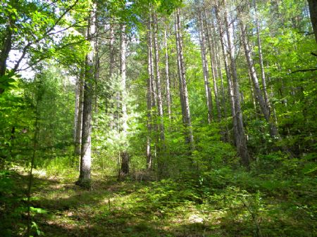 88+ Acres Wooded Recreational Hunt : Orange : Schuyler County : New York
