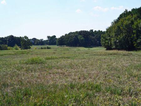 Bank-owned Fenced Farmland : Buckhead : Morgan County : Georgia