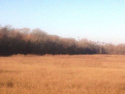 146.2 Acres On Private Lake : Des Arc : Prairie County : Arkansas