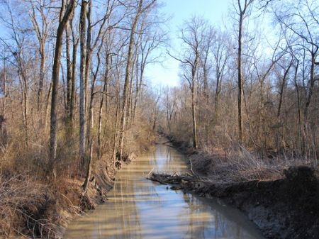 300 Acre Hunting Property : Marvell : Phillips County : Arkansas