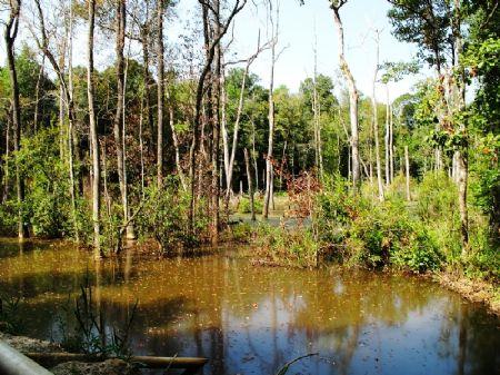 Monfort Farm : Cuthbert : Randolph County : Georgia