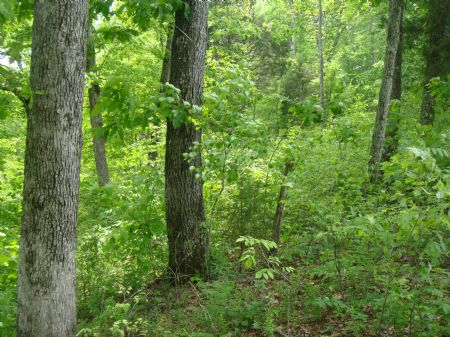 313 Acres-some Marketable Timber : Jamestown : Russell County : Kentucky