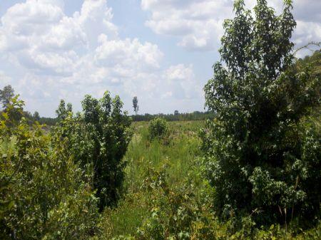 05003hb088 Wilcoxen Forest South : Crossett : Ashley County : Arkansas