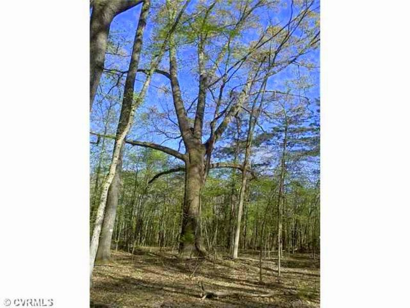10 Pilkington Road- 6.5 Acres : Powhatan : Powhatan County : Virginia