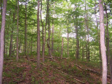 Scholl 40 : White Cloud : Newaygo County : Michigan