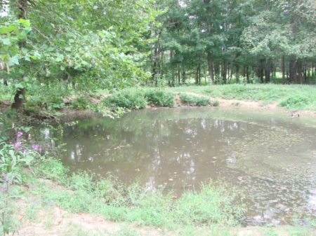 90 Acre Farm-close To Town : Columbia : Adair County : Kentucky