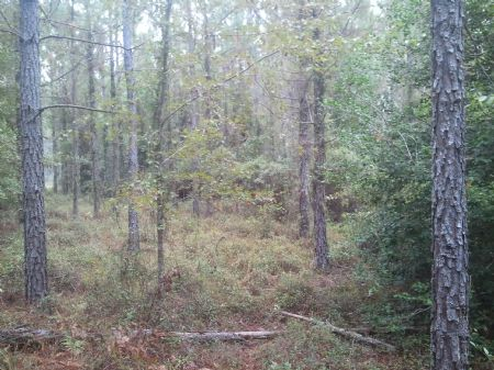Mayberry Farm- Hunting Tract : Rentz : Laurens County : Georgia