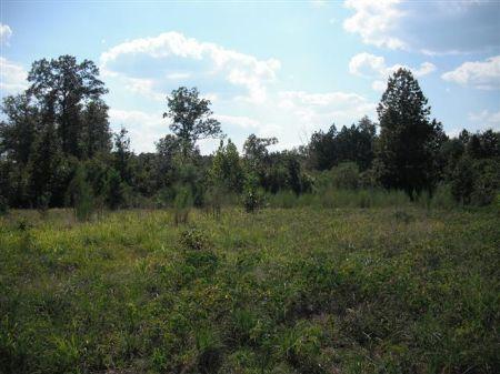 Great Opportunity, 300 Acres : Juliette : Monroe County : Georgia