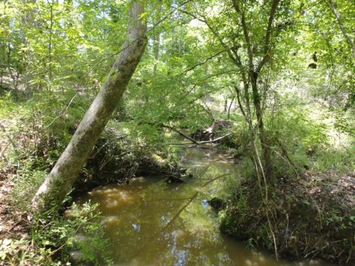 Bank Owned 165 Acre Tract : Warrenton : Warren County : Georgia