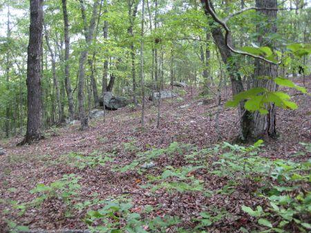 115+/- Wooded Acres : White : Bartow County : Georgia