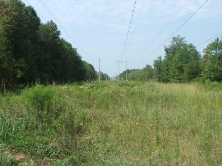 75 Acres Great Buy On Hunting Land : Selma : Dallas County : Alabama