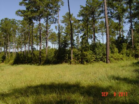 160 Acres Skinnerton/ Pine Orchard : Skinnerton : Monroe County : Alabama