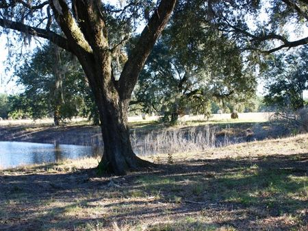The Farms At Rocky Creek : Marianna : Jackson County : Florida